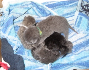 Kitten Pile