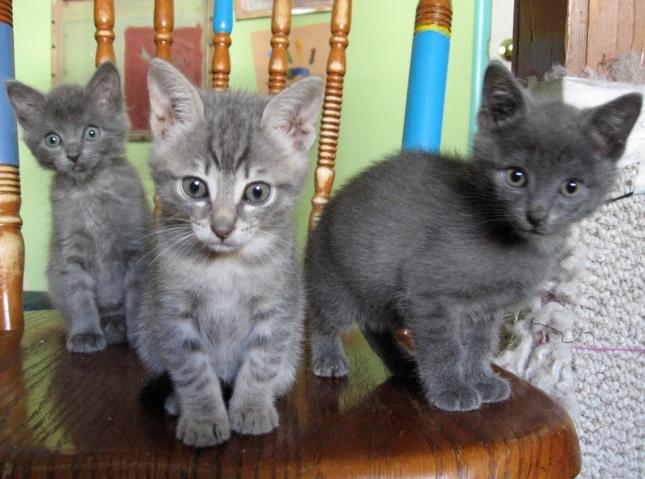 3 greys