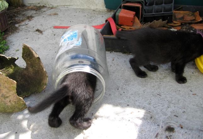 Kitten Preserves