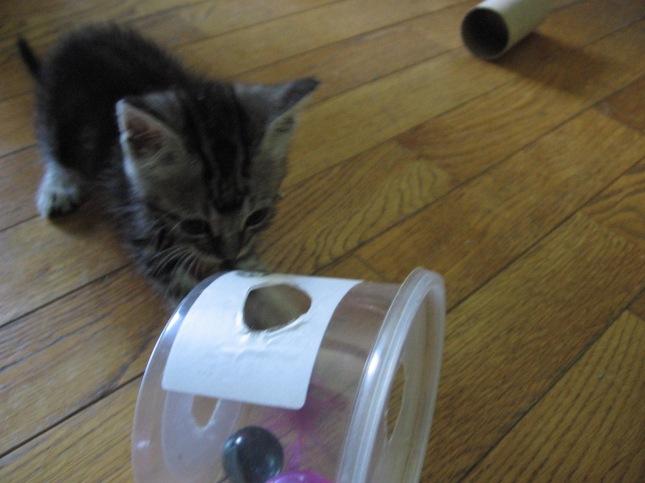homemade cat toys yetmorefosterkittens