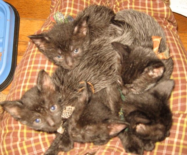 still lap-babies