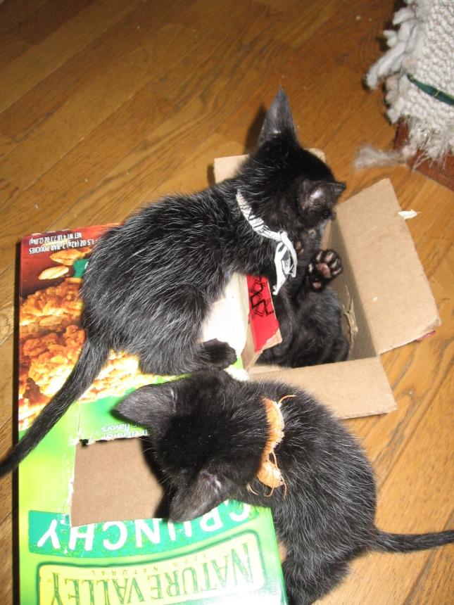 boxed set